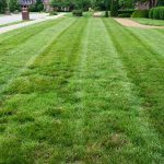 How To Dethatch & Aerate Your Lawn