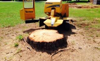 Ways to Remove a Tree Stump