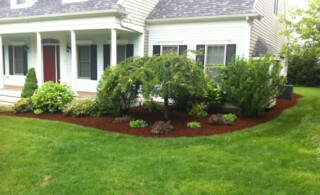 Home With Shrubs