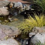Bog garden water feature