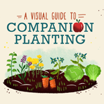Visual Guide To Companion Planting