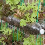 Tips on Growing a Stunning Vertical Garden