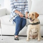 Blind woman with guide dog sitting on sofa at home