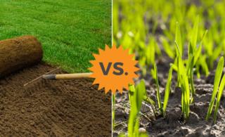 sod vs seed comparison