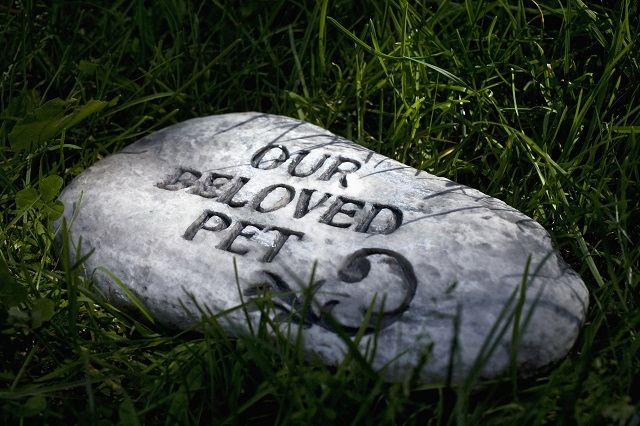 A gravestone for a pet