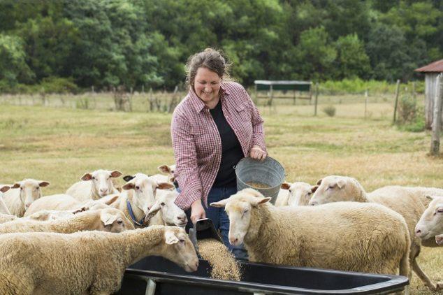 Female farmer feeding sheep in a field