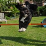 backyard-dog-agility