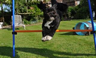 backyard-dog-agility