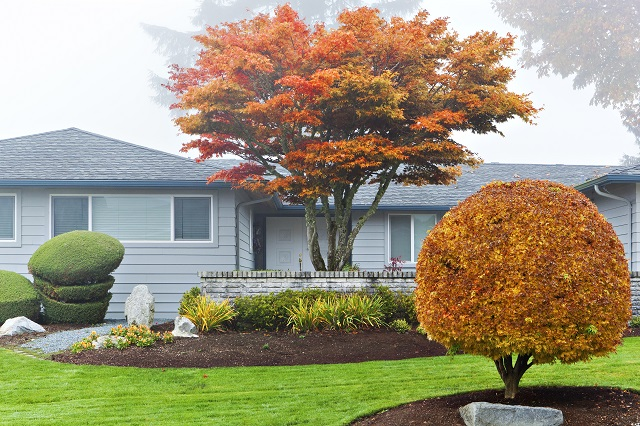 House with autumn-colored trees and well-kept shrubs in front yard