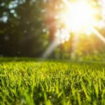 lawn grass in the sun