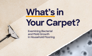 """image with text saying, """"What's in your carpet?"""""""